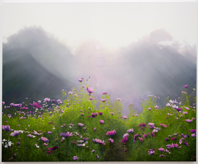 Trenton Garratt 'Clearing of flowers near the treeline'  Courtesy of Starkwhite