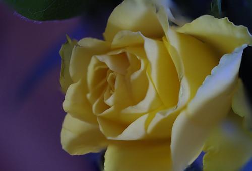 bloem fs2