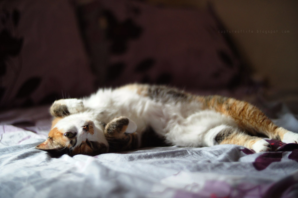 E Meow's life