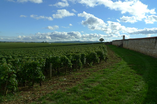 Route des Grands Crus near Puligny-Montrachet