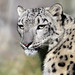 Cincinnati Zoo ... A girl named Renjy by Connie Lemperle