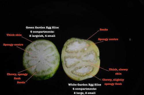 Garden Egg Crosssections and description