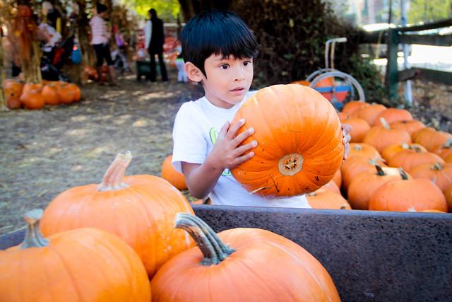 Pumpkin_2013-28