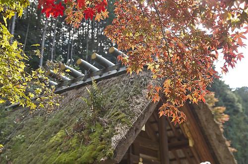 【写真】紅葉 : 日向大神宮
