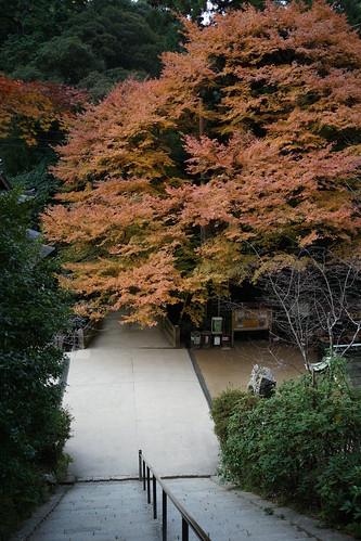 紅葉 兵庫県 姫路 2013 書寫山圓教寺