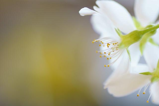 写真_訪れる春に想う