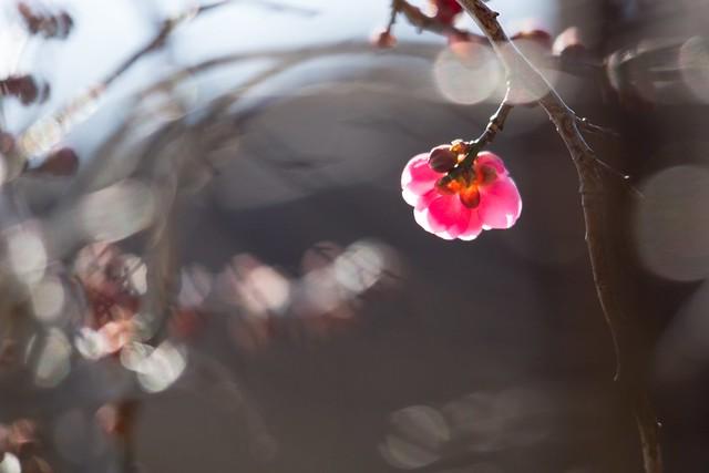 写真_春が来た!