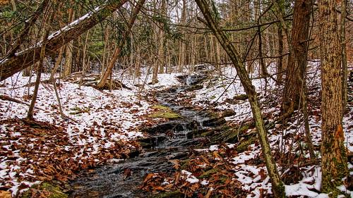 christmas snow leaves stream christmastree hemlock hdr treefarm conifer christmastreefarm hudsonvalley redhooknewyork dutchesscountynewyork sonyslta65v battenfeldschristmastreefarm