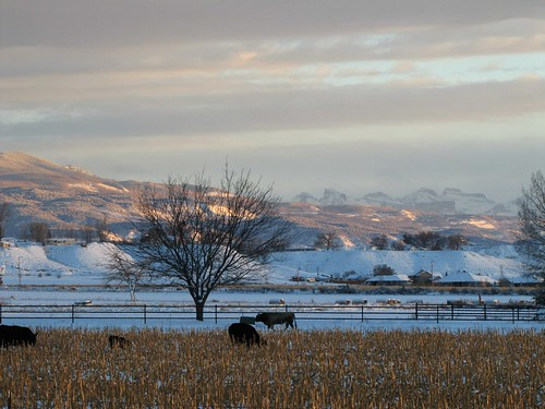 winter mountains clouds cornfield colorado cattle dusk grazing sanjuanmountains montrosecolorado