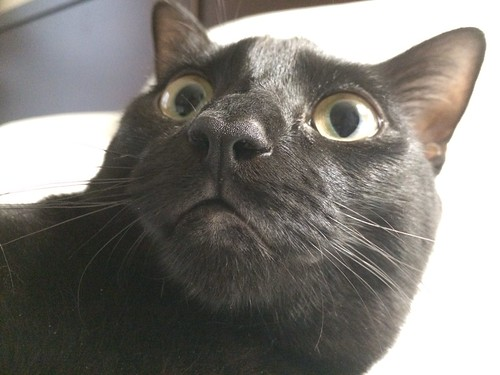 Martha Cat