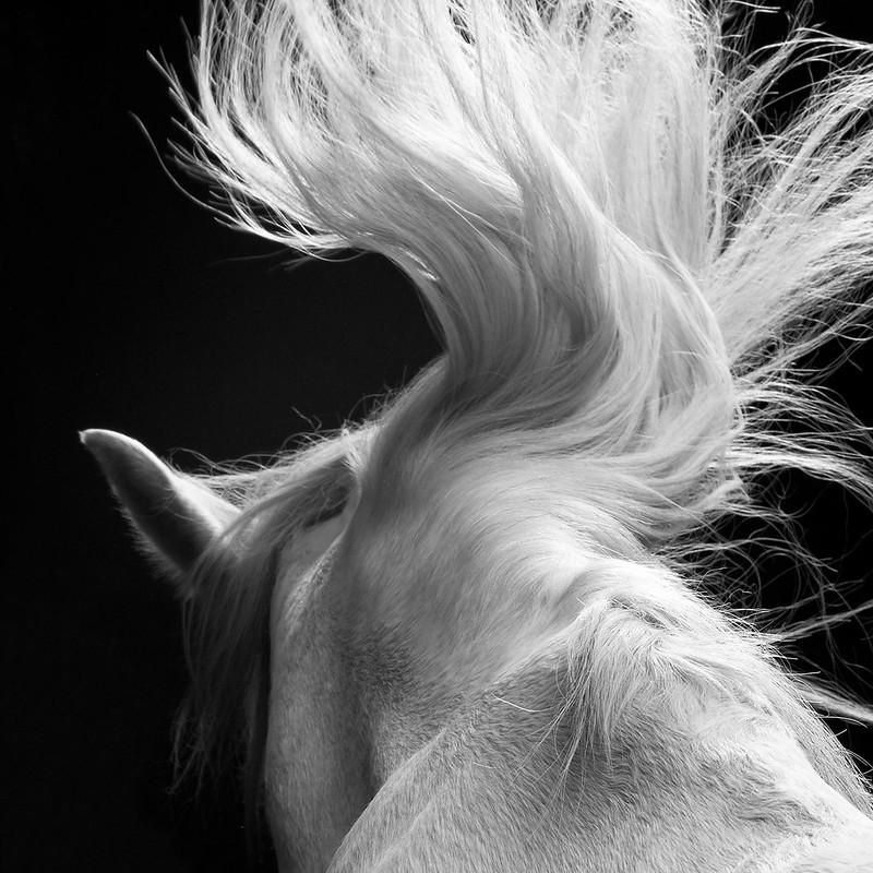 horse_A.P (10)