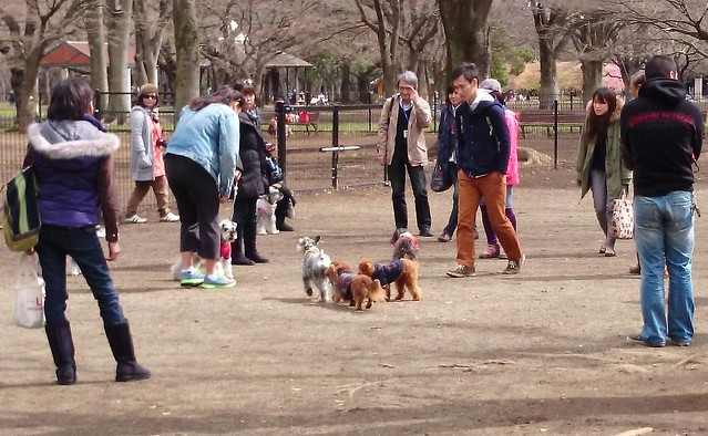 dog socialising in yoyogi park