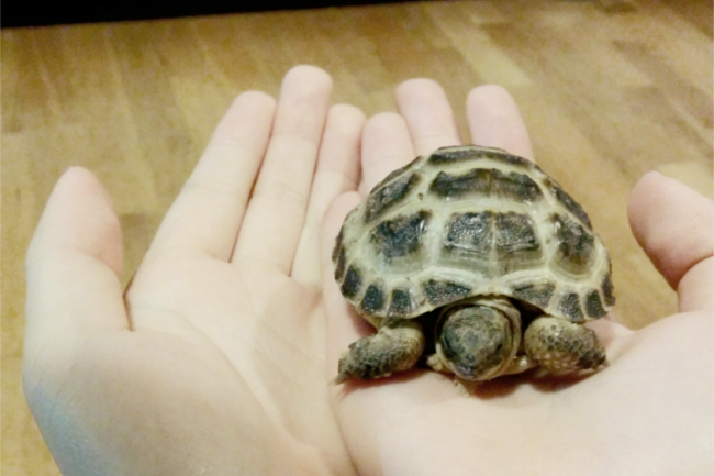 Daisybutter - UK Style and Fashion Blog: Horsfield tortoises, pet tortoises, photo diary