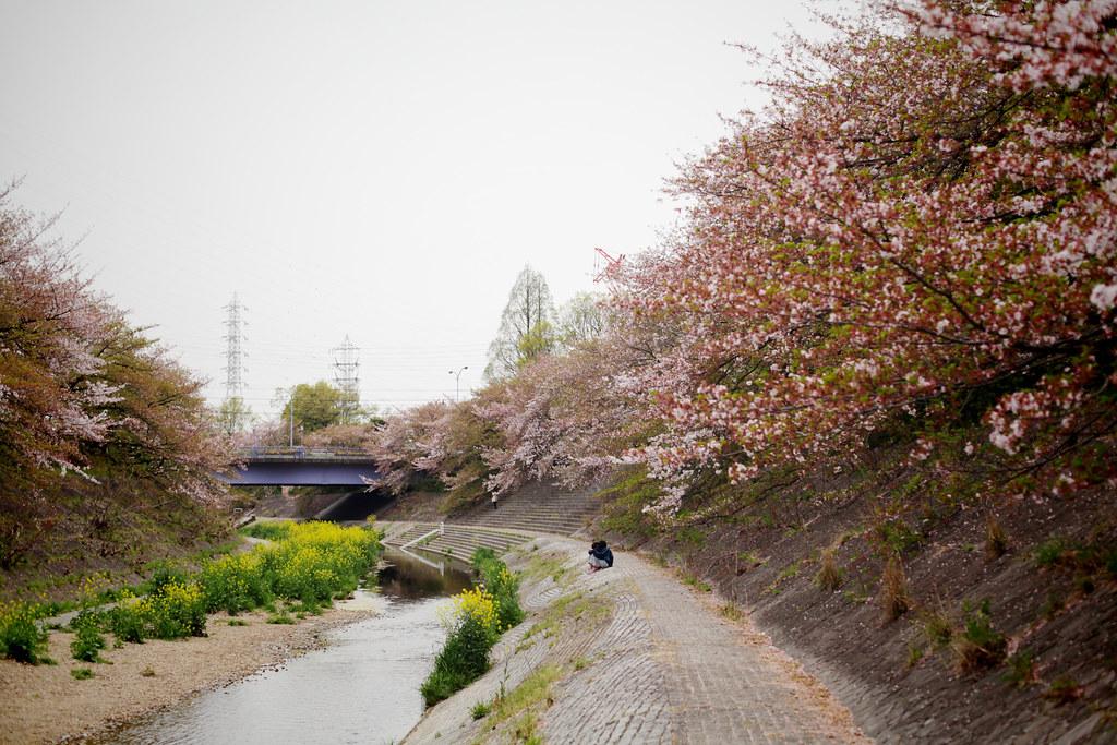 山崎川-22