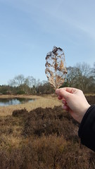 Dead Leaf (Hortus Haren)