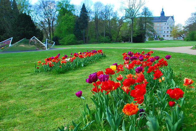 Tulips at the castle Wolfsburg