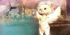 Angelic Saffia Kittyshins