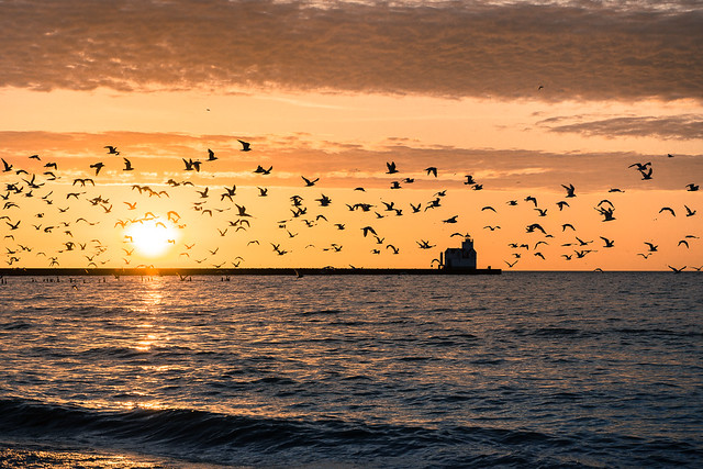 Sea Gulls, Lake Michigan, Kewaunee, Lighthouse, Wisconsin, Sunrise, Sunset