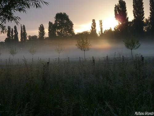 Par un matin de brume