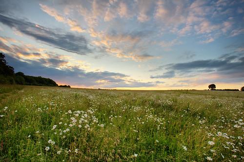 sunset hertfordshire sandridge moonpennies roantrum heartwoodforest