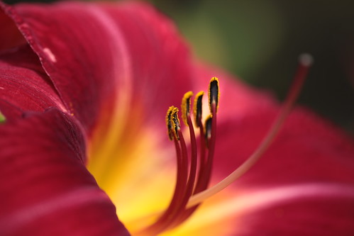 Daylily Day~ by conniee4 aka Connie Etter