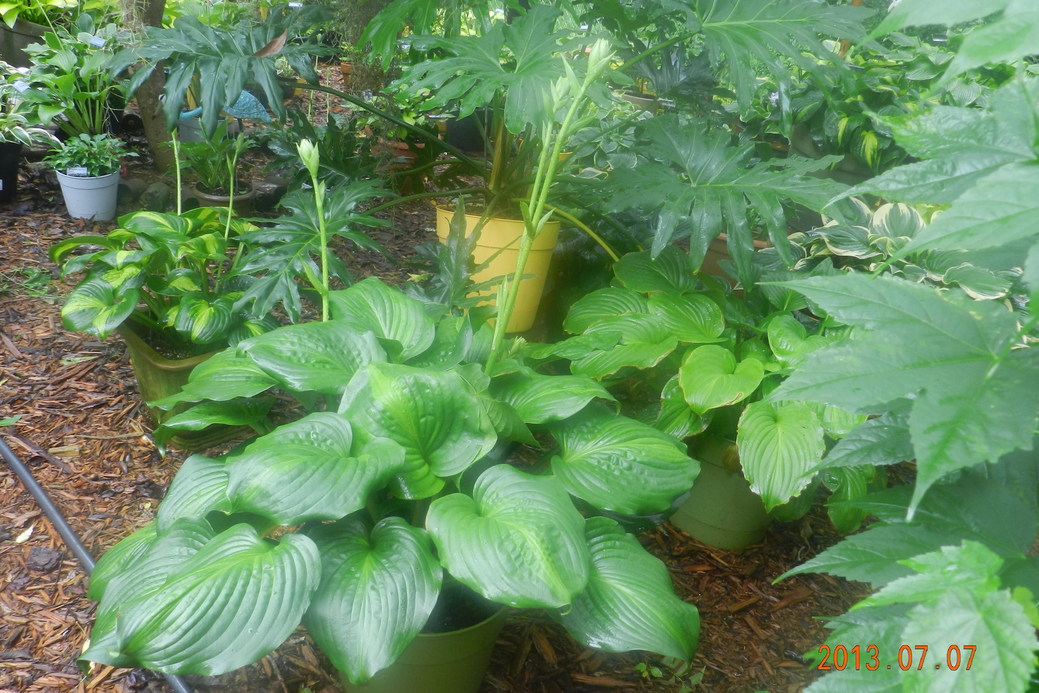 Garden13July0187
