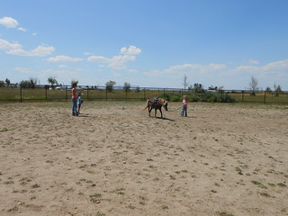 Horse Lessons 22July13 (2)