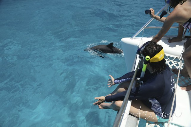 Bimini Dolphin Swim - 15/2013