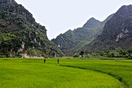 electric green fields of rice under jagged hills