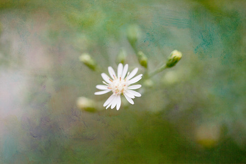 Simple Flower~ by conniee4 aka Connie Etter