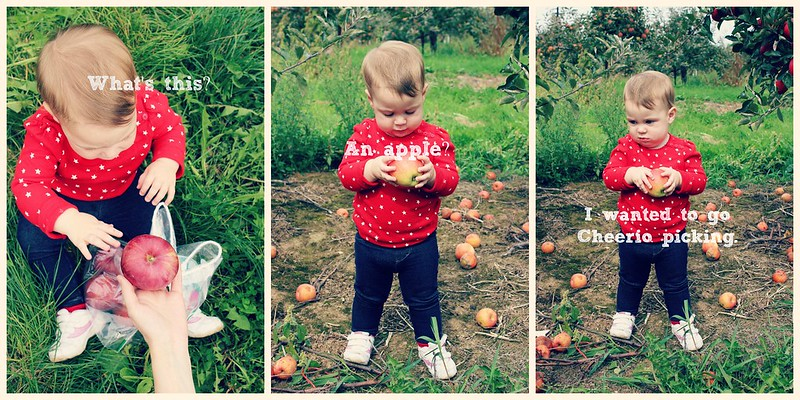 Apple Lila Collage