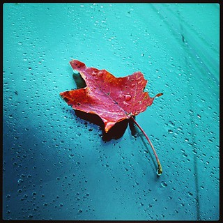 My windshield this morning #fall #foliage #newengland #leaf #raindrops