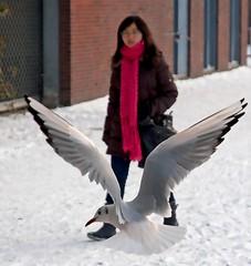 2010 12 03 Bijlmer Birds