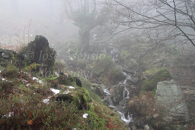 Parque Natural de Gorbeia/Gorbea #DePaseoConLarri #Photography 2140