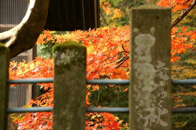 写真_流れゆく秋