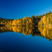 Norwegian Autumn Blue & Gold by RobertCross1 (off and on)