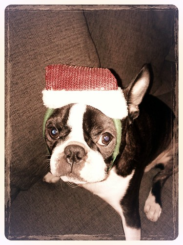 Merry X-Mas from Elvis & co.