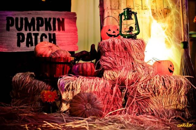 pumpkin patch (4)