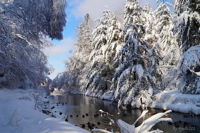 Sucker Creek & Mallard Ducks After February Snowstorm_5424