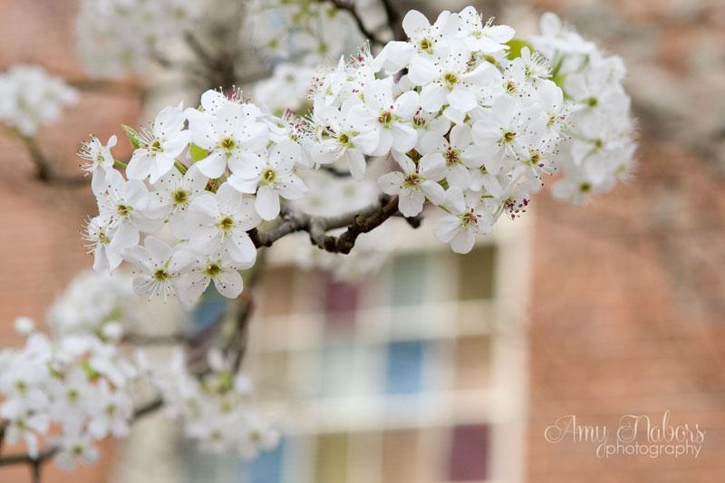 SpringTrees_Mar152014_0004