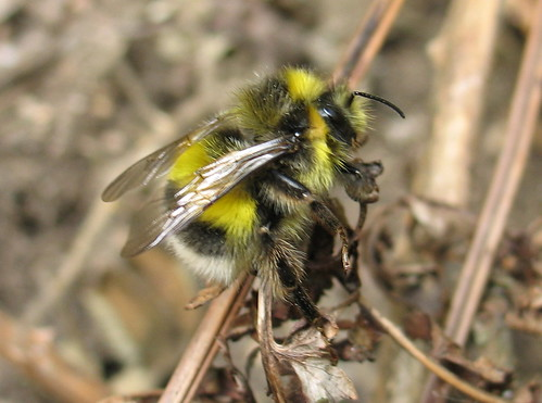 Bee 22052