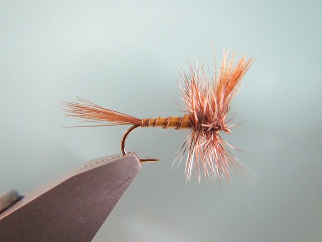 Western march Brown
