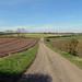 Near Scofton