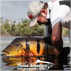 O espetáculo da pescaria é ver o peixe sendo devolvido para a água. Pratique o pesque e solte. By #AmazonLord  #pescaamadora #pescaesportiva #pesqueesolte #tucunareaçu #tucunare #monsterfish #flyfishing #peacockbass #bassmaniacs #amazonia #amazon #rionegr