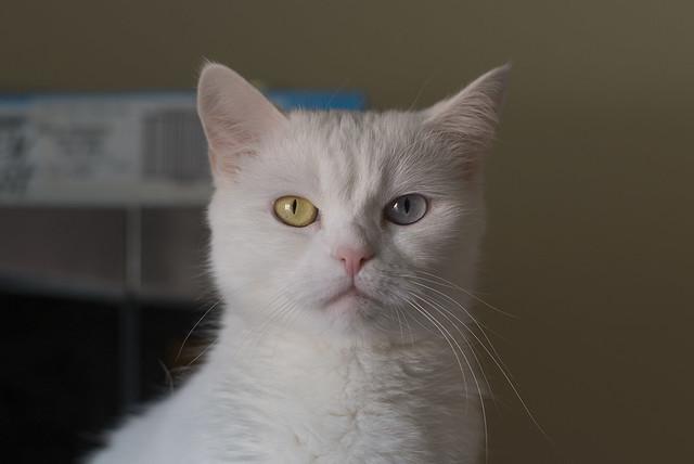 Sophie Front Portrait
