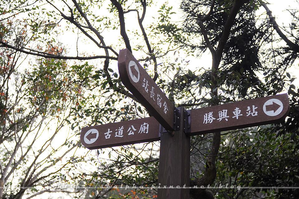 苗栗一日遊.大湖草莓.出關步道.勝興車站_img_36