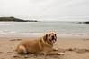 Bodega on the beach