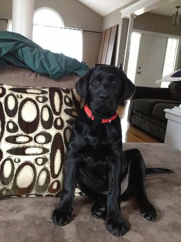 Max on the Sofa