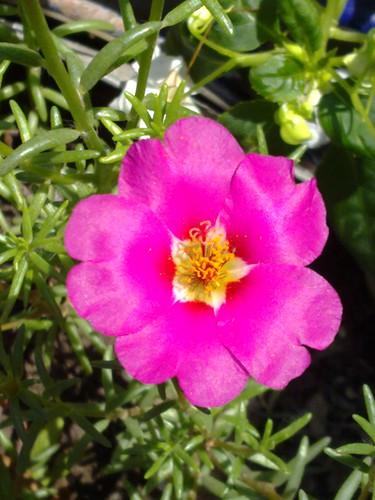 cvet by slucajni.prolaznik
