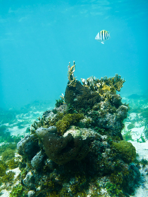 Serenity at Coral Reef